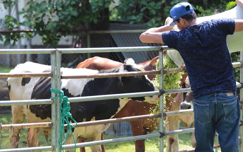 INTA instala III congreso internacional para fortalecer la ganadería