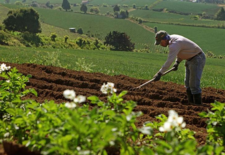 politicas de accion sector agricola de Nicaragua