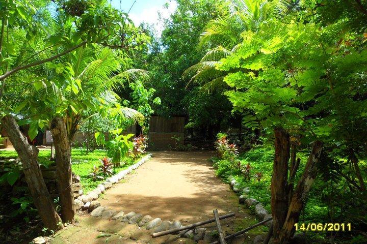 iguanas verdes centro ecoturistico loma de viento