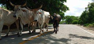 adoquinado diriamba calles para el pueblo nicaragua sandinista