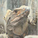 El Zoocriadero «El Guanacaste» en Nueva Segovia comprometido con la biodiversidad