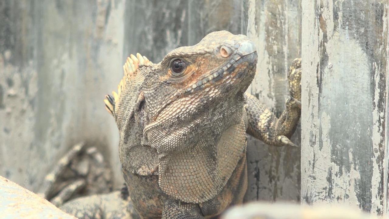 """Zoocriadero """"El Guanacaste"""""""