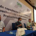 Nueva aplicación digital proyectará la producción agrícola