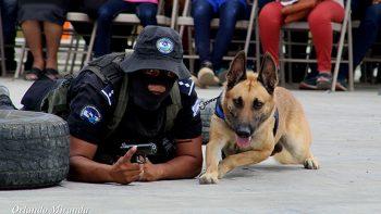 Culmina exitoso curso de técnicas caninas de la Policía Nacional